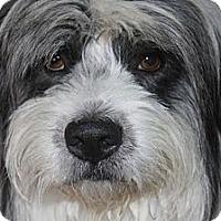 Adopt A Pet :: ALEXANDER - Mission Viejo, CA