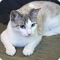 Adopt A Pet :: Clarissa - Chicago, IL