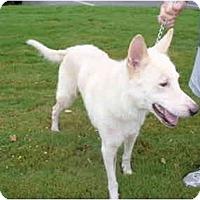 Adopt A Pet :: Cotton - Albany, NY