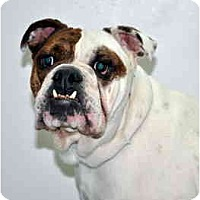 Adopt A Pet :: Bubbles - Port Washington, NY