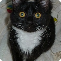 Adopt A Pet :: Cooper 1 - Plainville, MA