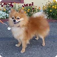 Adopt A Pet :: Tucker - Santa Rosa, CA