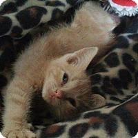 Adopt A Pet :: Tator Tot - Mount Laurel, NJ