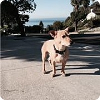 Adopt A Pet :: Sasha - Courtesy Post - Beverly Hills, CA