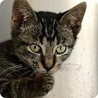 Adopt A Pet :: Spice - East Brunswick, NJ