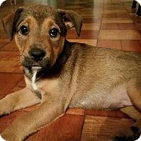 Adopt A Pet :: Saiorse - Gainesville, FL