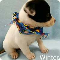 Adopt A Pet :: Winter (adopted) - Trenton, NJ