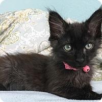 Adopt A Pet :: BooFrankie - North Highlands, CA