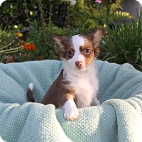 Adopt A Pet :: TANGO - Newport Beach, CA