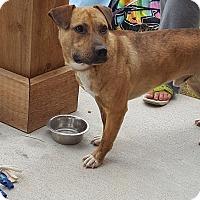 Adopt A Pet :: Reese - sanford, NC