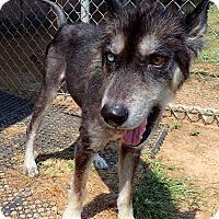 Adopt A Pet :: Brulee - Sugar Land, TX