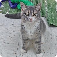 Adopt A Pet :: Guinevere - Chambersburg, PA