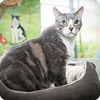Adopt A Pet :: Ari - New York, NY