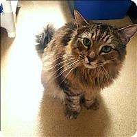 Adopt A Pet :: Monty - Riverside, CA