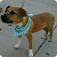 Adopt A Pet :: Teka - Albemarle, NC