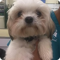 Adopt A Pet :: Riley - Royal Palm Beach, FL