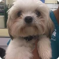 Adopt A Pet :: Riley - Royal Palm Beach, FL