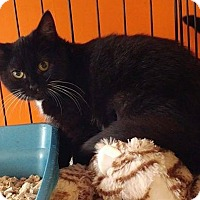 Adopt A Pet :: Esmerelda - Middletown, NY