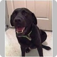 Adopt A Pet :: Gunner - Pittsboro, NC