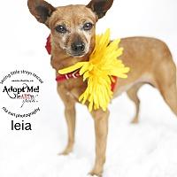 Adopt A Pet :: Leia - Aqua Dulce, CA