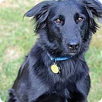 Adopt A Pet :: Sonic - Tinton Falls, NJ