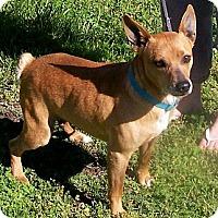 Adopt A Pet :: Curl - Byrdstown, TN