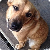 Adopt A Pet :: Luna ~ Adoption Pending - Youngstown, OH
