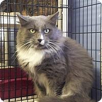 Adopt A Pet :: Dom - Colmar, PA