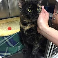 Adopt A Pet :: Gretchen - Muncie, IN