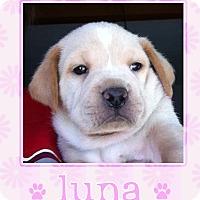 Adopt A Pet :: Luna - La Quinta, CA