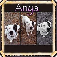 Adopt A Pet :: Anya - Groveland, FL