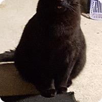 Adopt A Pet :: Bruno - Fairborn, OH