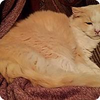 Adopt A Pet :: George - Ennis, TX