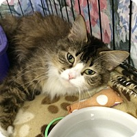 Adopt A Pet :: Erika - Byron Center, MI