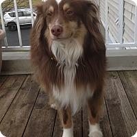 Adopt A Pet :: Rico - Elk River, MN