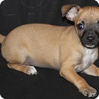 Adopt A Pet :: Jelly Bean: Lemon - Palo Alto, CA