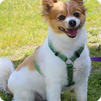 Adopt A Pet :: Marty - Grants Pass, OR