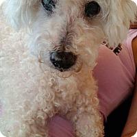 Adopt A Pet :: Miles - Ft. Lauderdale, FL