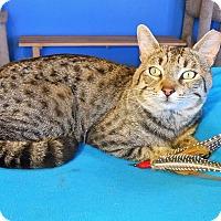 Adopt A Pet :: Sammy - Glendale, AZ