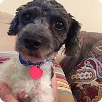 Adopt A Pet :: Briggs - Troy, MI