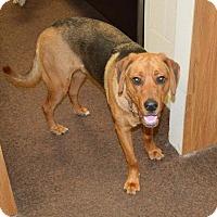 Adopt A Pet :: Edward - Cincinnati, OH
