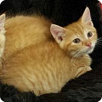 Adopt A Pet :: Zeus - Jeannette, PA