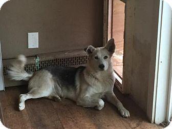 German Shepherd Dog Mix Dog for adoption in Parker Ford, Pennsylvania - Hal