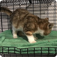 Adopt A Pet :: Rusty - millville, NJ