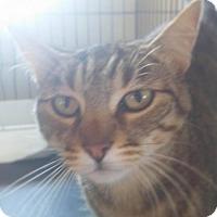 Adopt A Pet :: CALYPSO - Corona, CA