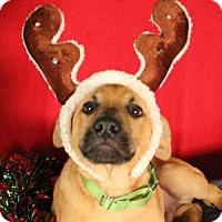 Adopt A Pet :: Grumpy - Dallas, TX