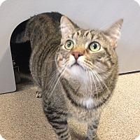 Adopt A Pet :: Mia - Sarasota, FL