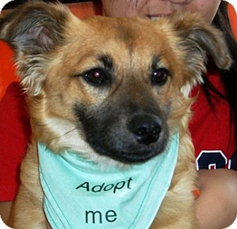 Josie | Adopted Dog | 1308 | Castro Valley, CA | German ...