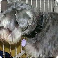 Adopt A Pet :: Rudy - Rigaud, QC