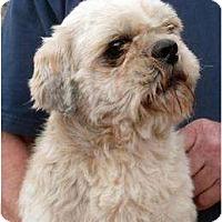 Adopt A Pet :: Bogart - Harrison, AR